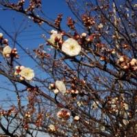 薫風漂う湘南の春