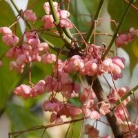 新年の「長居植物園」を訪ねる!・・その2・木々の花篇・・