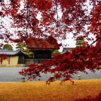『想いでの紅葉』 京都御苑