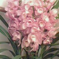 バレリーナの花保ちってめちゃめちゃええやん〜。