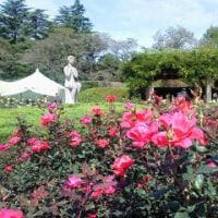 神代植物公園(161023)