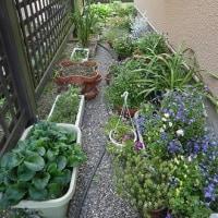 裏庭の花たち (2017年5月20日撮影)