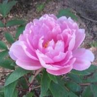 若葉が美しい時季、自然の中で楽しみましょう。健康に最高....!