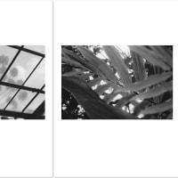 ゴトーマサミ WEB 写真展(232) #Summicron-Straight
