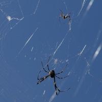 グロテスクな蜘蛛さんも.....。