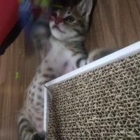 猫じゃらしのおもちゃ