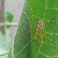 庭にいる蜘蛛