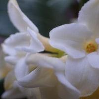花の季節に