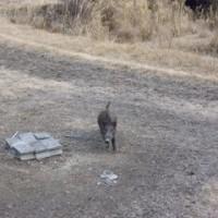 2月8日有害鳥獣捕獲「鹿1頭 猪1頭」