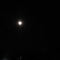 黄色いお月さま