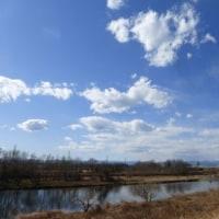 見事な冬枯れ…多摩川冬景色シリーズ