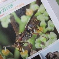 Hachi Handbook
