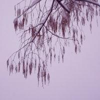 積雪の一齣