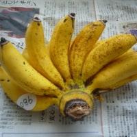 沖縄編 島バナナ