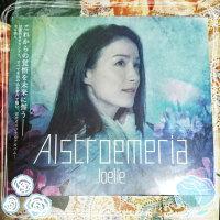 Joelleさんのアルバム Alstroemeria