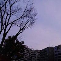 今日の私は798 【1月18日の博多の朝です】