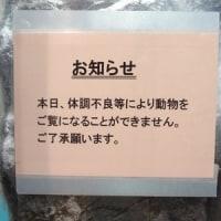 そうだ!ワニを見に行こう(^o^)/