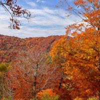 デコ平周辺の紅葉