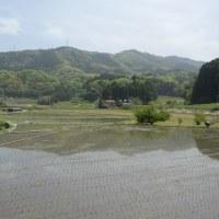 山野草の季節(1)