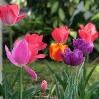 新しいブログ「5月の聖会とゴスペルコンテスト!」が始まります
