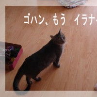 5月28日(夕)  頭突き~