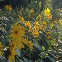 野の花 2016 夏から冬