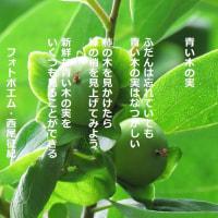 青い木の実