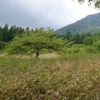 6月23日  プラ〜リ日光小田代ヶ原近辺