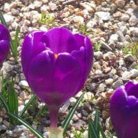 今の季節の「花と緑の学習園」