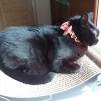 昼1時の妹猫