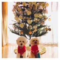クリスマスツリーとぱぴぷ〜ちゃん♪