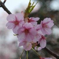 桜も舞い散るころに・・