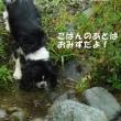 初めてのデイキャンプ~中津川編~