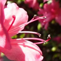 糸が絡んだ花粉の謎。