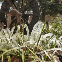 日野用水とリハビリ