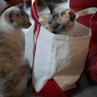 おねこ in bag
