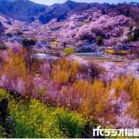 ラジオ福島 ベリカード 花見山風景