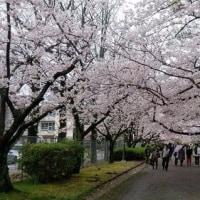 4月7日(金)のつぶやき 母と弾丸花見 舞鶴中学跡 笑顔満開 第32回早良高等学校 入学式出席
