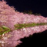 4月9日(日)のつぶやき★「春雨じゃ濡れて行こう!」とはいかない冷たい雨の日曜日、花見も延期してテレビで中山、阪神競馬場の桜を視る!★