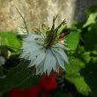 涼しげな花で一息つく