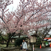 2017 春の京都