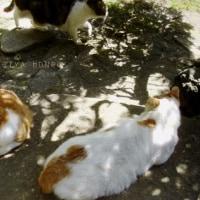 同化シテルゼ *こもれびの猫