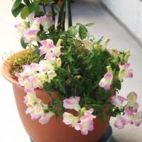 にぎやかな花たち