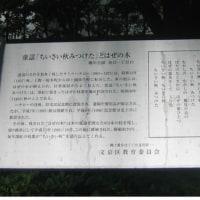 [小さい秋みつけた] ハゼの木     サトウハチロウの記念樹