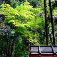 渓流に沿って-京都市左京区:貴船神社