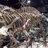 恐竜博物館へ