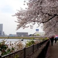 2017年4月10日の隅田川の桜