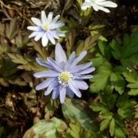 早春に咲く草花