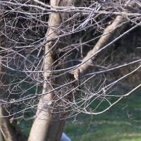 ●普正寺の森(金沢・健民海浜公園)ジョウビタキ♂ アトリ シジュウカラ モズ 白鷺 藪椿 カモ オオバン