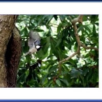 巣から飛び出る野鳥